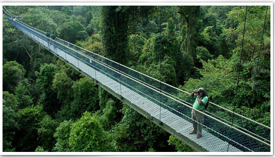 HSBC Treetop Walk Singapore Map,Tourist Attractions in Singapore,Things to do in Singapore,Map of HSBC Treetop Walk Singapore,HSBC Treetop Walk Singapore accommodation destinations attractions hotels map reviews photos pictures